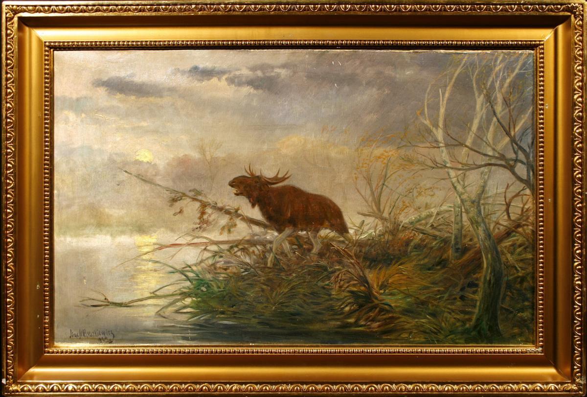 Łoś na mokradłach, 1924 r. - 2