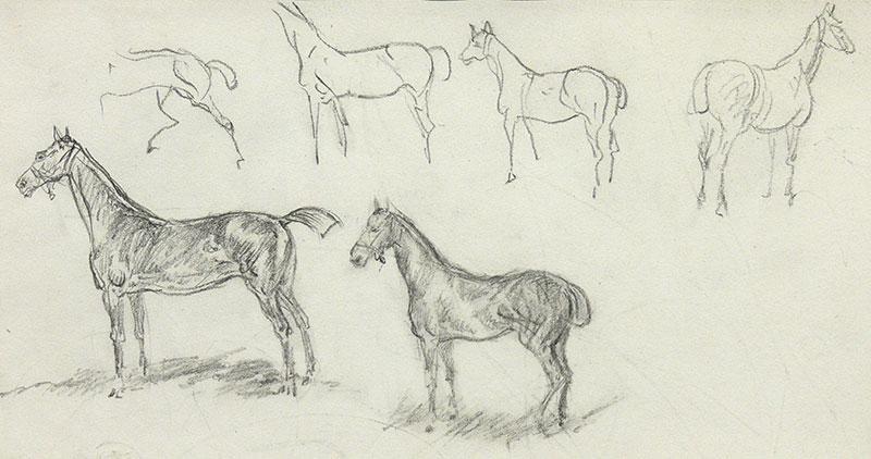 Szkice koni