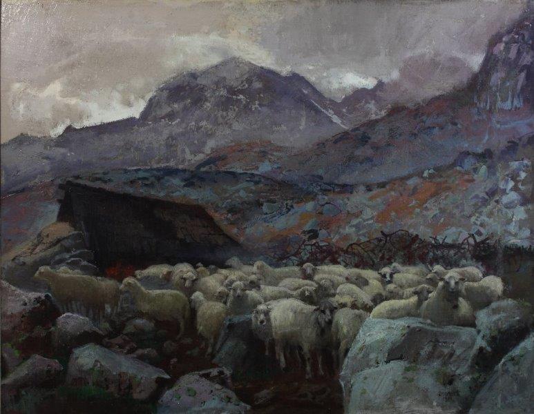Owce w Dolinie Pięciu Stawów