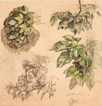 Szkice roślin, 1919 r.
