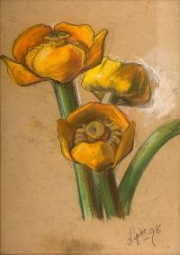 Grążel żółty, 1898 r.