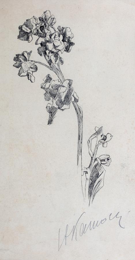 Studia łodygi z kwiatami, ok. 1900 r.