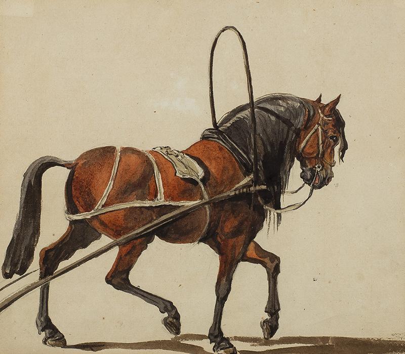Koń w zaprzęgu