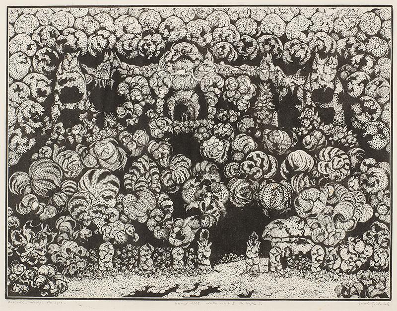 Bukowiec naoczny - dla syna, 1969 r.
