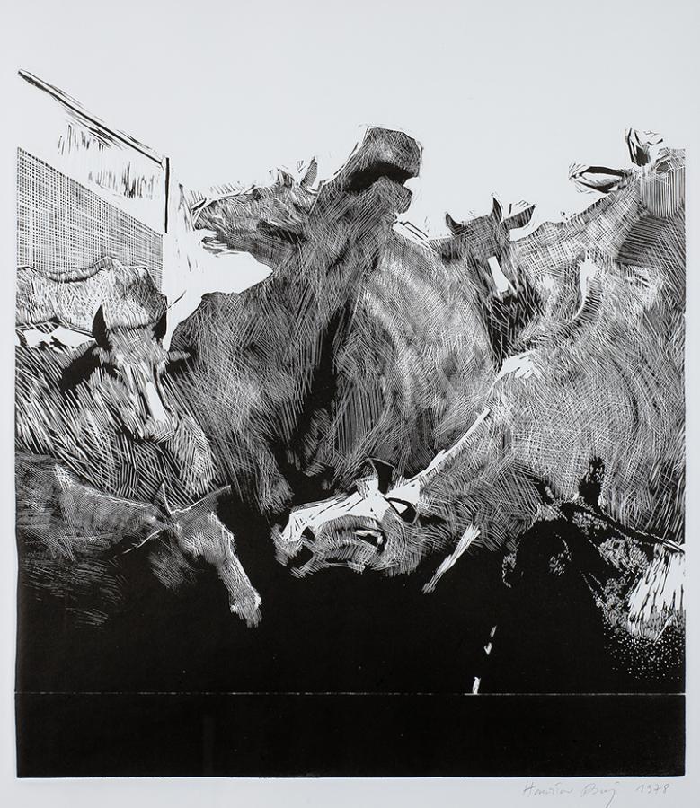 Krowy, 1978 r.