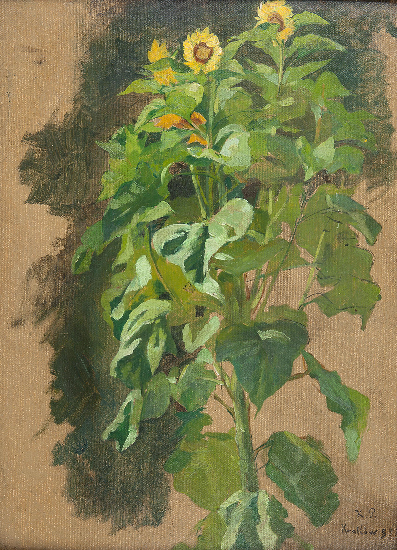 studium-slonecznikow-1893-r-kazimierz-pochwalski