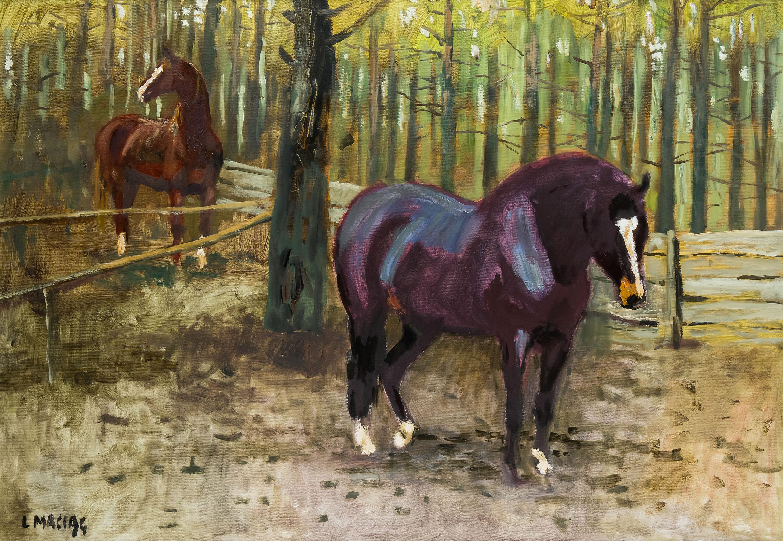 konie-ludwik-maciag