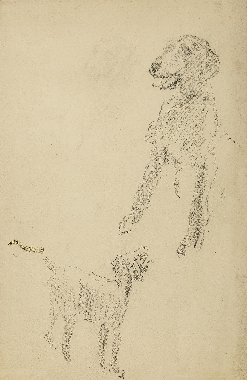 Józef Mehoffer | Szkic psa