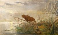 Łoś na mokradłach, 1924 r.
