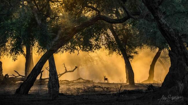 bajkowy-poranek-z-impala