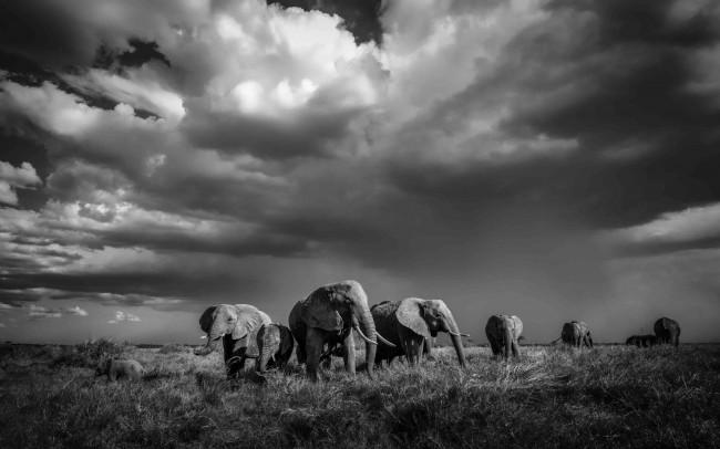 burzowe-serengeti