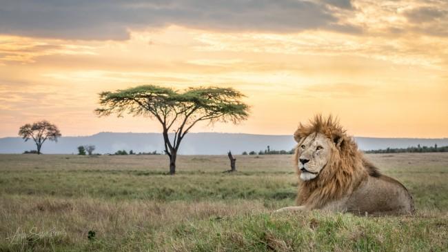 kwintesencja-serengeti